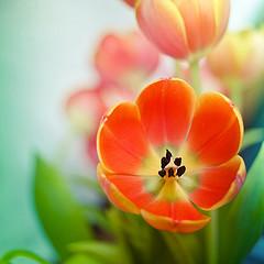 cubagallary-flickr