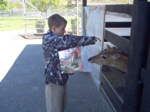 Liam introducing Phyllis to a grown deer at the petting zoo