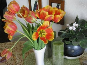 Tulips for Susanna