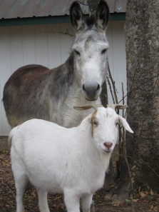 Edmund and 'Buddy' Lambert