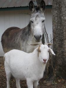 Edmund and 'Buddy' Lambert