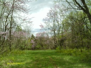 ViviLnk Path to red bud alley behind my house!
